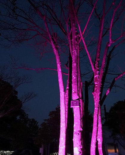 植栽 ライトアップ